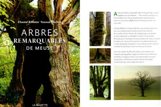arbre-remarquable3